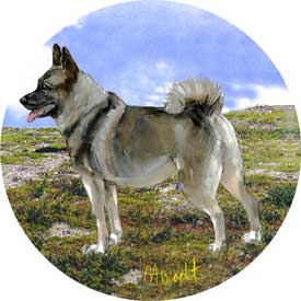 p-2144-Elkhound-Magnet.jpg